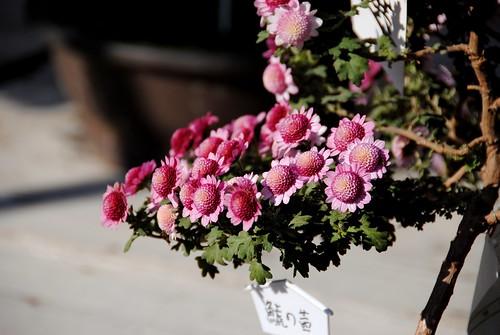 Fall Nagoyajo 042r