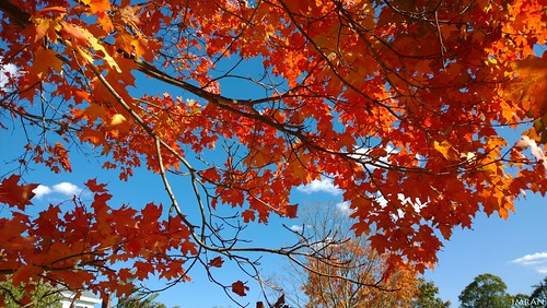 Look Up, Fall (Coming) Down! - IMRAN™ - (SOOC) by ImranAnwar