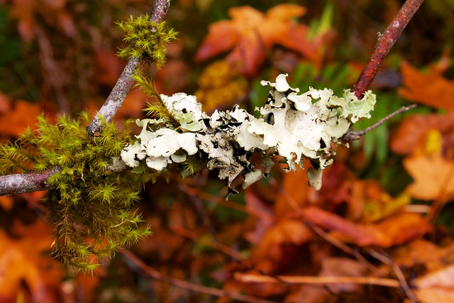Moss and Fungus on Branch