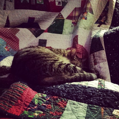 Marie is enjoying my Christmas quilt.