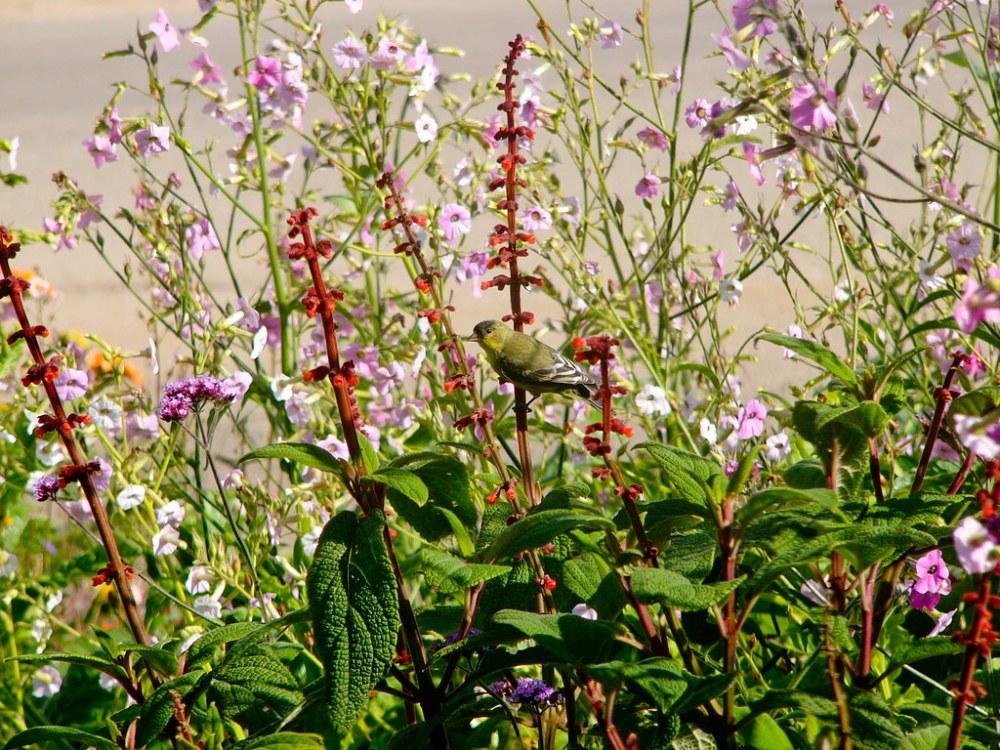 Wildlife in the Garden (2/6)