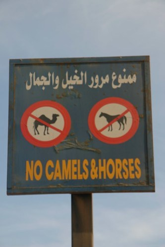 """No Camels & Horses"" sign, Dahab, Egypt"