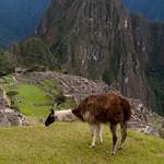 Machu Pichu 05