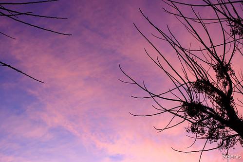 De um céu cor-de-rosa by selenis