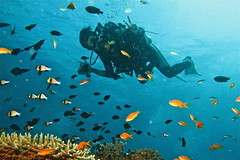 Scuba Diving Raya Island - Image by Adriano Trapani