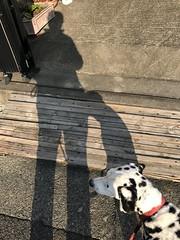 オッドとお散歩