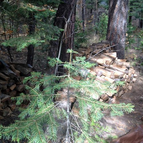 woodpile in progress