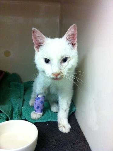 Help Save Coney Island Cat 'Snow Coney' and His Friends