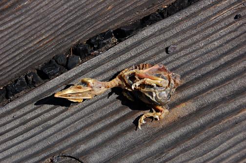 dead chick port
