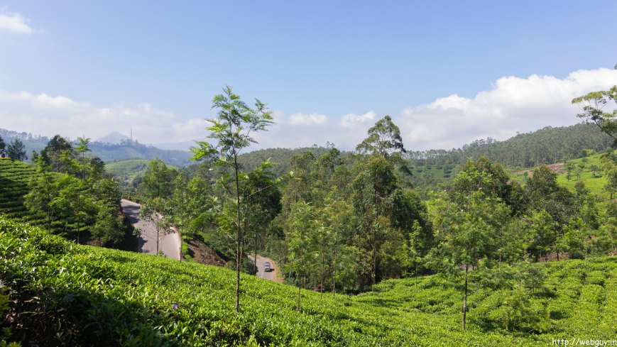 Gorgeous Tea Gardens of Munnar