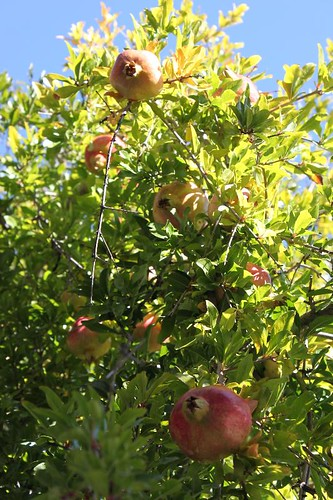 20131011_7087_pomegranates_Small