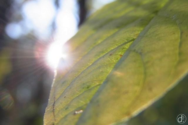 Herbstlicher Lichtzauber