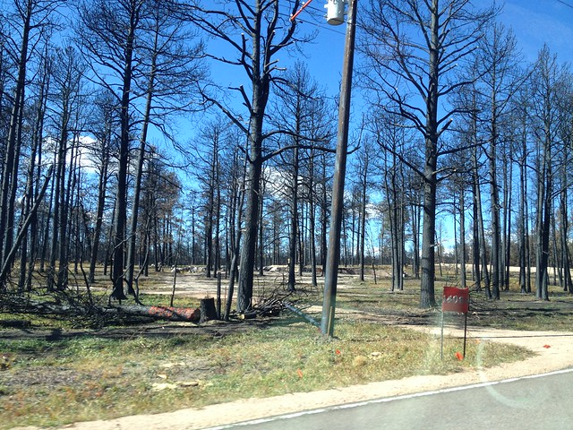 Picture from the Black Forest Fire