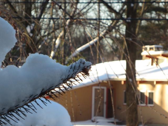 snow on pine tree branch - f5.9 (compact camera)