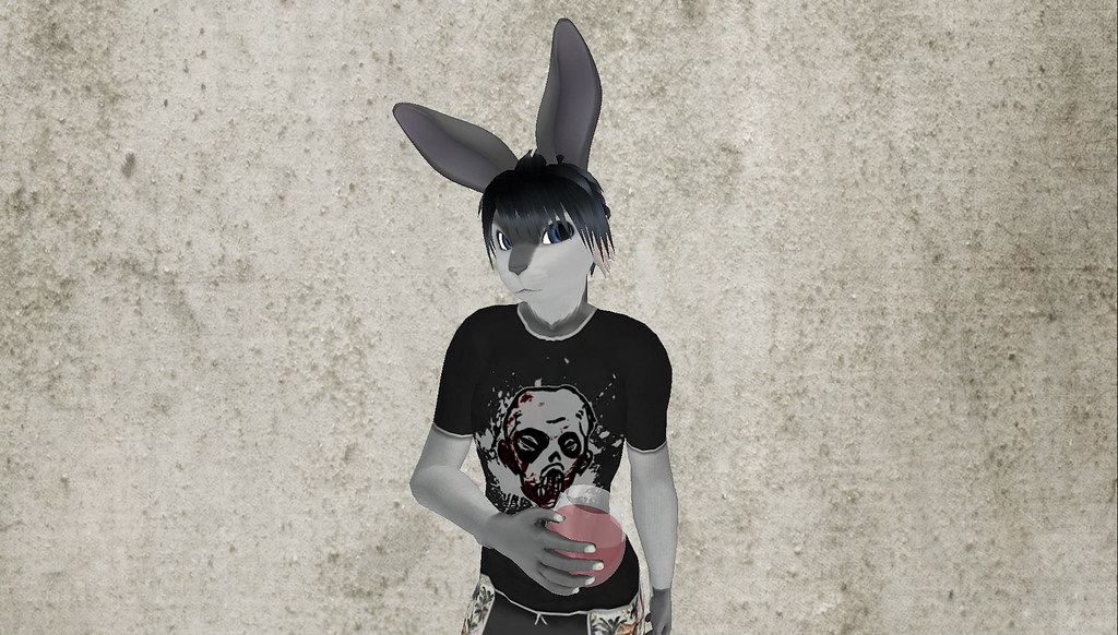 BunnyBlog5