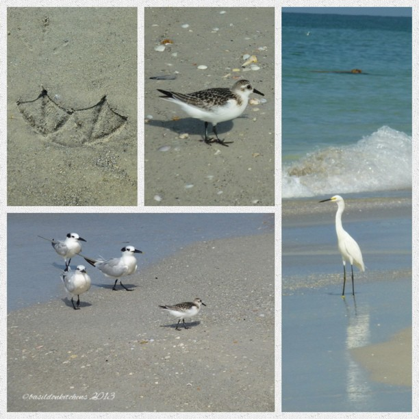 Sep 19 - hummingbird {no hummingbirds here, but this is what I found on my morning walk today} #photoaday #florida #madeirabeach #birds #egret #gulls #footprints #titlefx #picframe