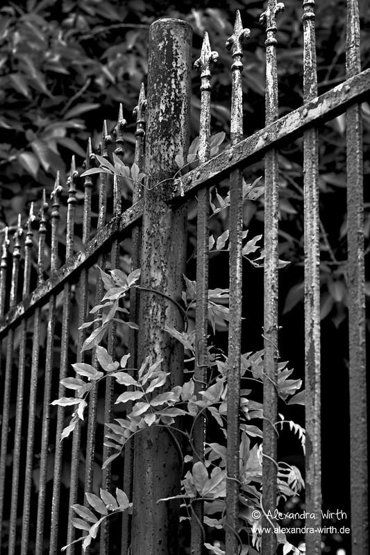 Zaun by Spinnerelschen