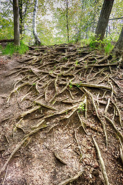 A field of roots.