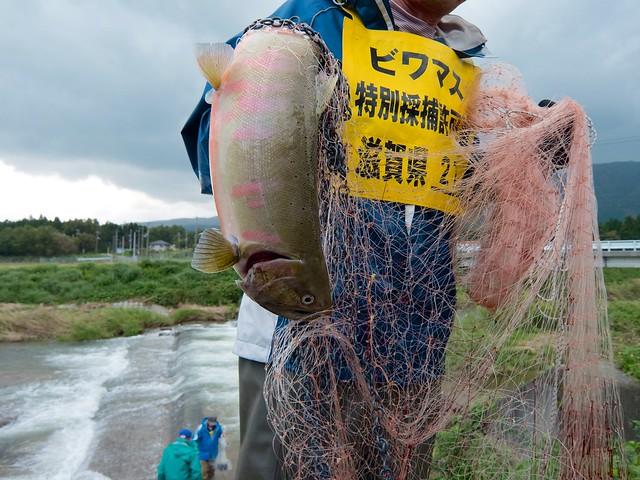 Biwa Trout(ビワマス)