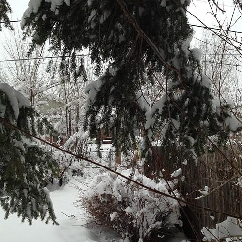Winter? #denver by @MySoDotCom