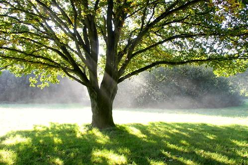 http://www.flickr.com/photos/19396658@N00/9899705266