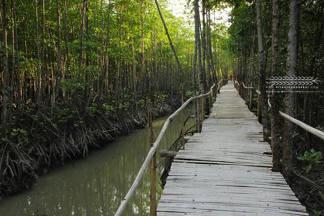 Bakhawan Mangrove Ecopark Kalibo Aklan Philippines