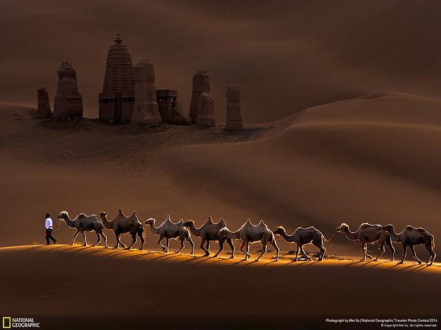 camel1600x1200