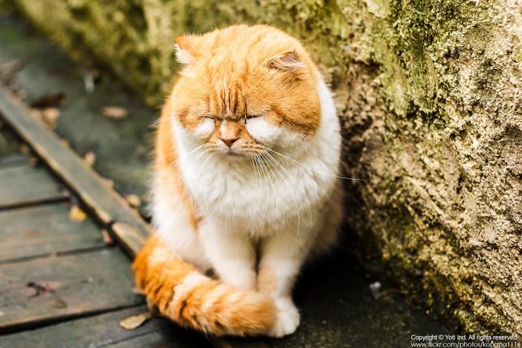 [花蓮吉安] 雙叟香草貓園