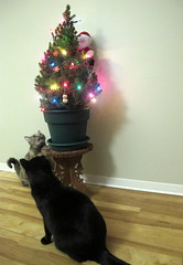 Tree Inspectors