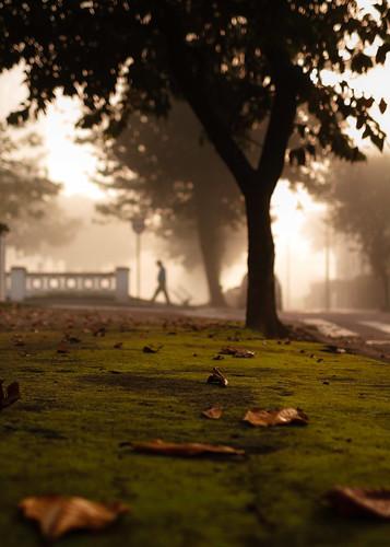 Leaves by Luiz L.