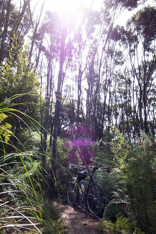 Manuka Forest Flare