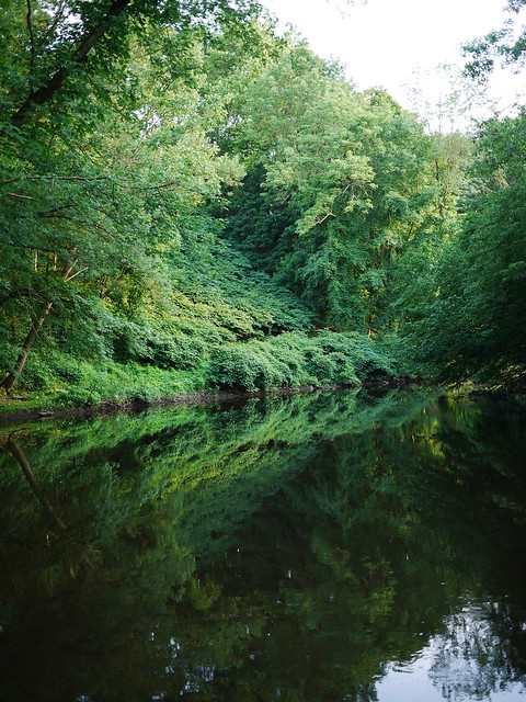 green reflections in the passaic river