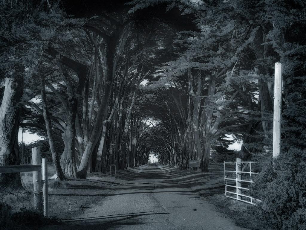 Radio Road #2 - Point Reyes - 2013