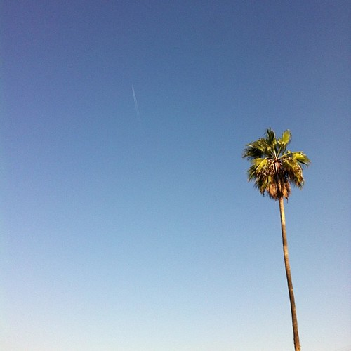 Lone palm + distant plane