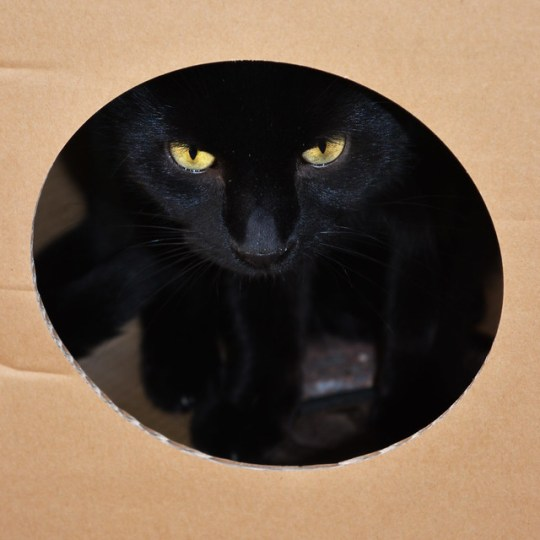 Black cat in a box! from Flickr via Wylio