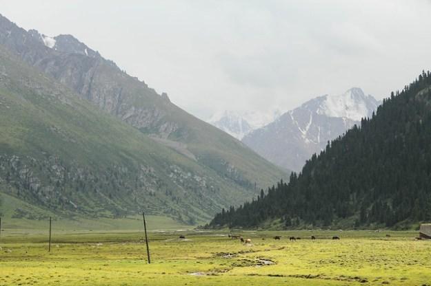 Drive to At-Jailoo. South Inylchek Glacier Trek