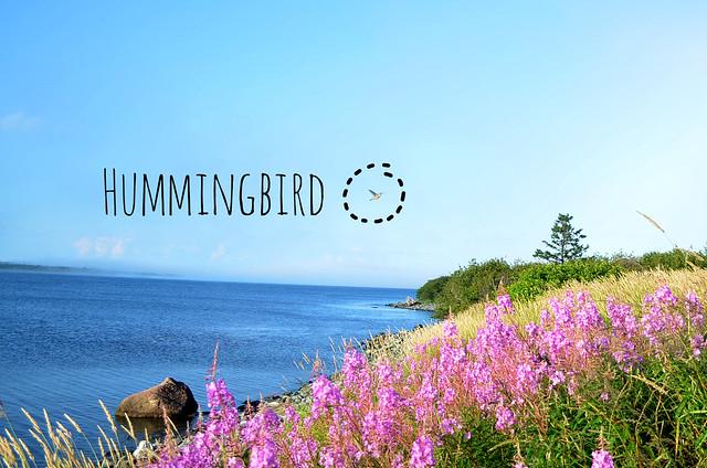 DSC_0971 hummingbird 2