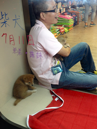 20130816 Pet store Shibas