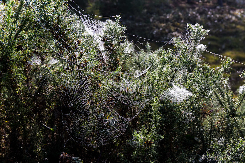 Webs after a misty start