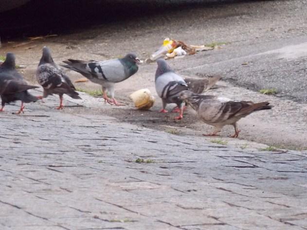 """Não é exatamente um """"Café da manhã na Tiffany's"""", mas os pombos estão curtindo"""