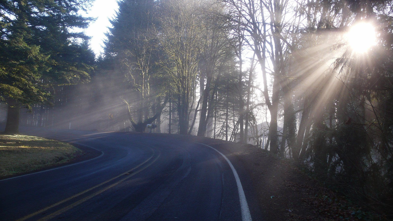 Cycling out of fog up Bald Peak in the Chehalem Mountains near Forest Grove and Newberg Oregon