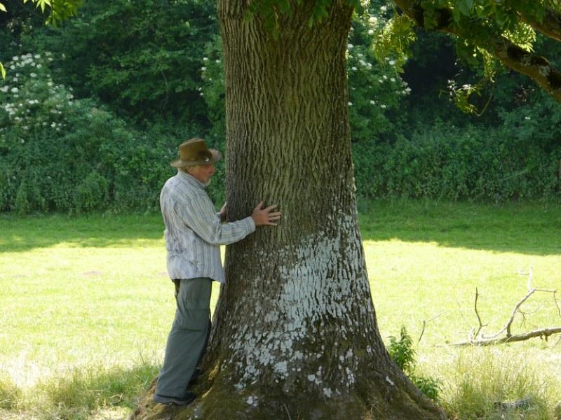 Tree aura 3
