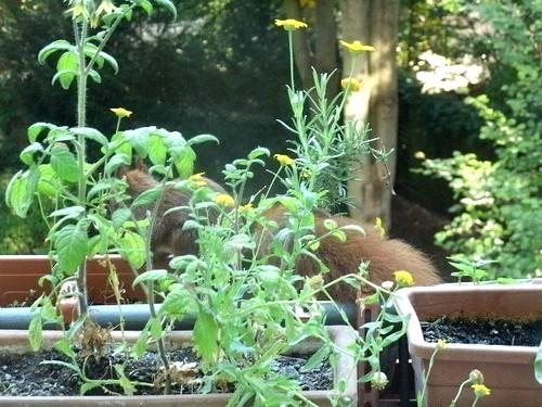 Hörnchen auf dem Balkon 1