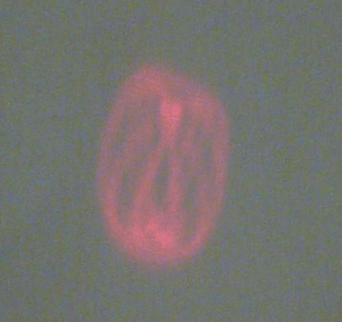 Laser Oscilloscope-012