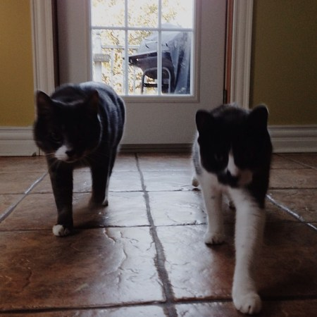 On the catwalk #vscocam #cats