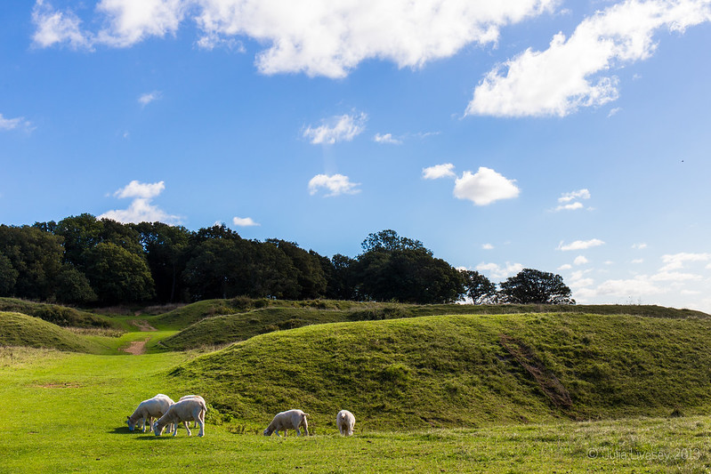 Sheep grazing on Badbury Rings