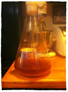 yeast starter for california steam kit