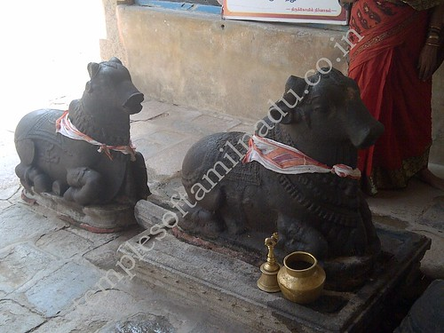 Two Nandis in front of Lord Shiva's shrine