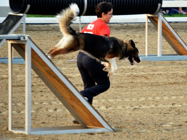 Search and Rescue Dog Agility