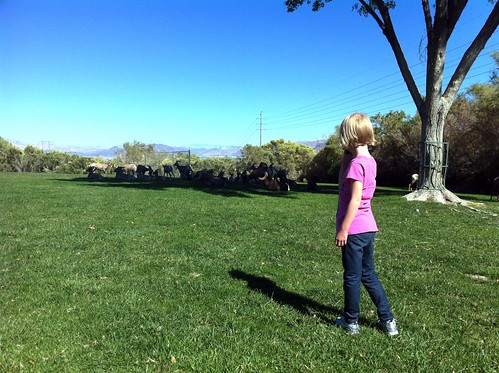 watching the big horn sheep